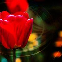 И даже пень в весенний день фотает цветочки. :: Вячеслав Филиппов