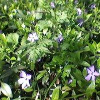 Весна! :: Миша Любчик