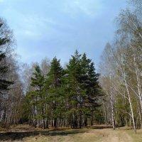 Смешанный лес. :: Мила Бовкун