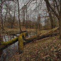 Пробуждение от зимней спячки :: Saloed Sidorov-Kassil