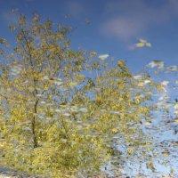 Небо и земля :: Сергей Николаевич