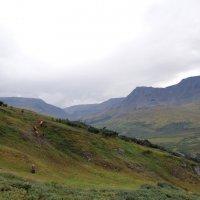 Полярный Урал :: Arcadii Mayrhofen