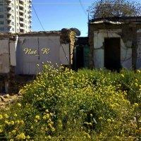 развалины уже успели зарасти ... :: maxim