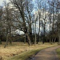 На алеях парка :: Сергей