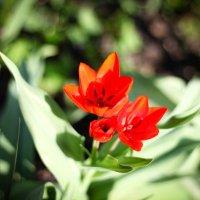 Весна в Алмате :: Арина Берестяк