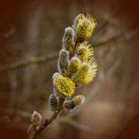 Цветы деревьев. :: Лилия Гудкова