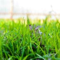 Трава уже зелёная :: Света Кондрашова