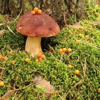 Белый гриб :: Ivan Dem