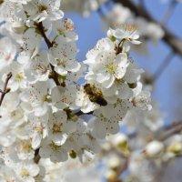 весна :: Дмитрий Рузаев