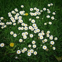 Цветёт земля!!!!! :: Galina Dzubina
