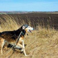 Отпустите меня в поля! :: Ольга Алеева