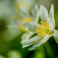 цветы :: Александр Байков