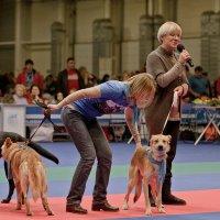 Подари собаке дом - 1 :: Nina Grishina