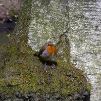 Птица :: Nina Yudicheva