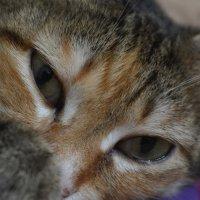 Cats eyes :: Ирина Лебедь