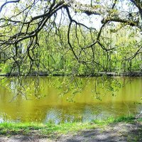 Кусочек озера в апреле :: Маргарита Батырева