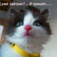 ...... :: александр дмитриев