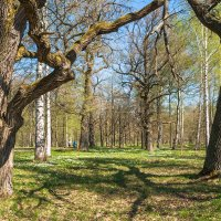 В парке весна 4 :: Виталий