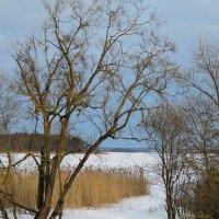 Зимнее озеро :: Николай Котко