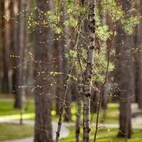 Апрель в Сибири :: Ольга