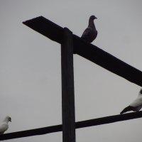 Всяк голубок знай свой шесток :: Андрей Лукьянов
