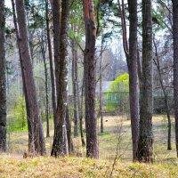 В лесу под Смоленском :: Милешкин Владимир Алексеевич