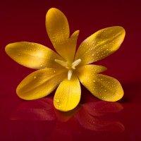Просто цветочек... :: Sergey Apinis