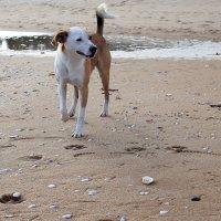 Солёный пёс :: Swetlana V