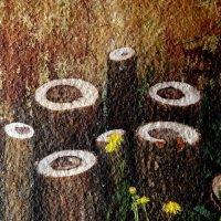деревья и одуванчики :: Николай Овечко