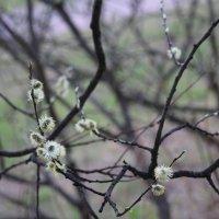 Весна :: Отто Шельник