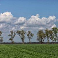 Весна на донской земле. :: Константин Снежин