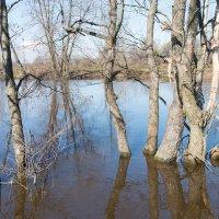 Подтопило деревца :: Андрей Зайцев