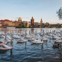 Апрельская Прага :: Алексей Морозов