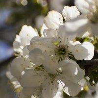 цветы :: олег мысак