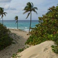 Тропинка вывела к океану... (Куба) :: Юрий Поляков