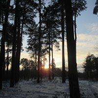 Закат в лесу. :: Valentina