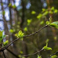 У нас - весна :: Юрий