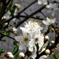 Пришла весна :: imants_leopolds žīgurs