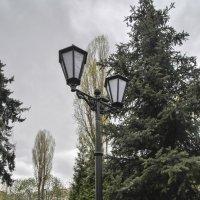 Парк городской Администарции :: Эдвард Ясень