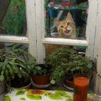 Мои ужин и кот :: Владимир Дядьков