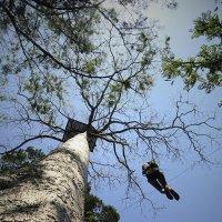 Человек на дереве :: Anastasia Melnikova