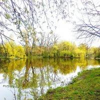 Озеро в парке :: Маргарита Батырева