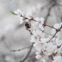 Flower_87 :: Trage