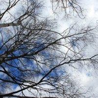 Весеннее небо :: Наталья Лунева