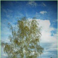 Весенний портрет :: юрий Амосов