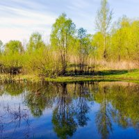 Весна, все зеленеет.. :: Юрий Стародубцев