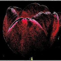 Чаша тюльпана :: Нина Корешкова