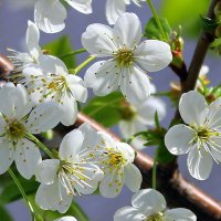 Словно невеста, свежа и невинна, цветочки вплетает в венки. :: Валентина ツ ღ✿ღ