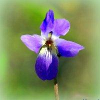 Весны цветенье :: Андрей Заломленков