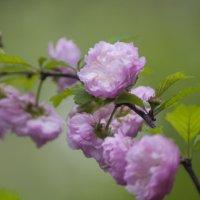 Flower_81 :: Trage
